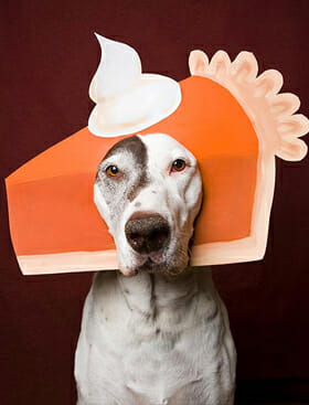 Happy Thanksgiving from Lucky Dog Charlotte!