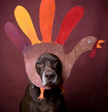 Happy Thanksgiving from Lucky Dog Lake Norman!