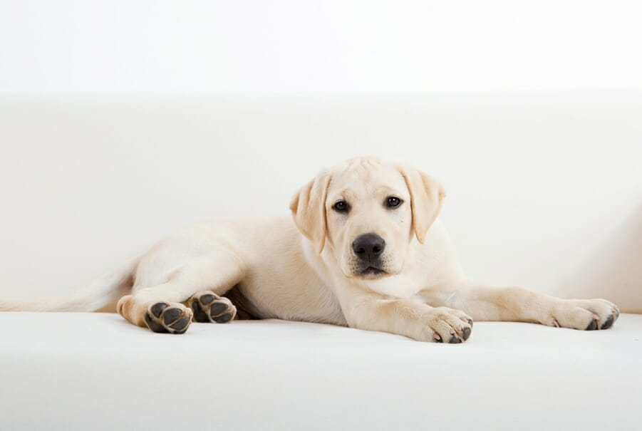Massage Therapy Can Help De-Stress Your Pup!