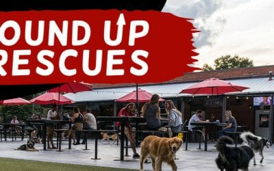 Round Up for Rescues