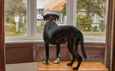 Is Doggy Daycare Good for Separation Anxiety?