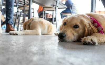 Why Lucky Dog Is the Perfect Spot for a First Date