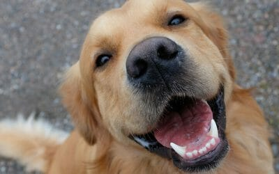 How to Get Rid of Your Dog's Bad Breath for Good!