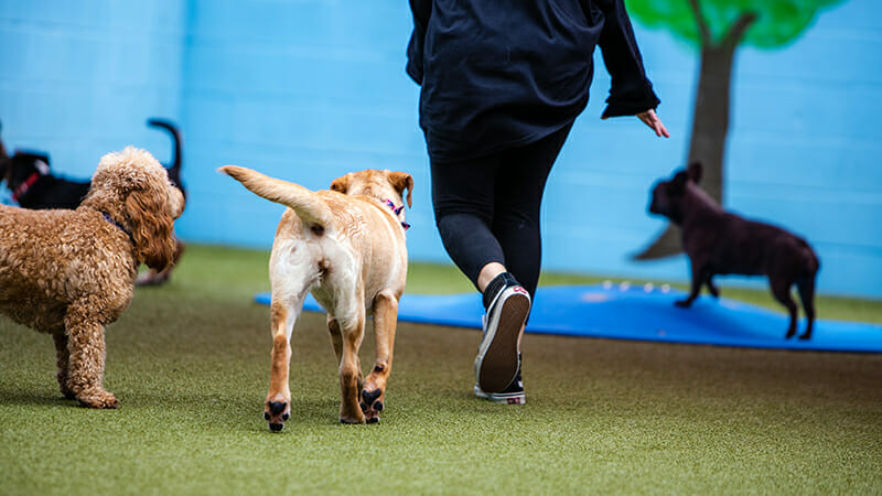How Much Does Dog Boarding Cost and Is It Worth It?