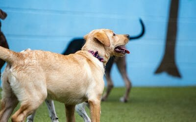 The Average Cost of Doggy Daycare and How to Know if It's Worth It