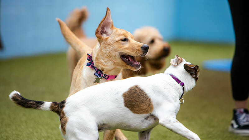 6 Tips to Socialize Your Dog Easily and Effectively