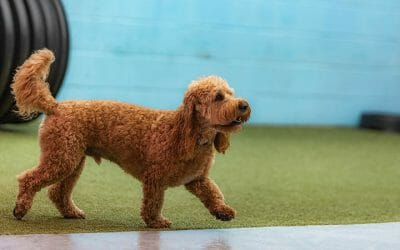 How Often Should Your Dog Attend Daycare?