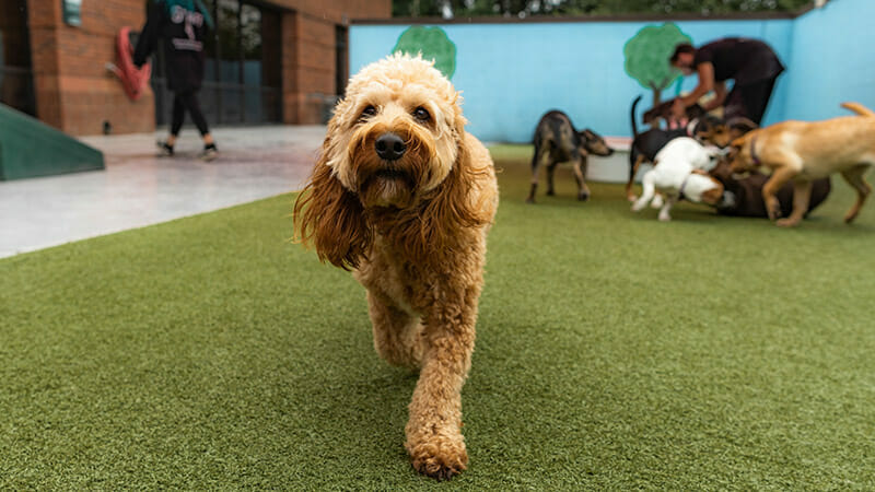 Weekend Dog Boarding: Your Dog Is in Good Hands!